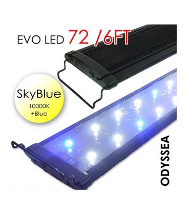 "Odyssea EVO LED 72"" 6ft 156W - Skyblue 10000K & Actinic Blue"