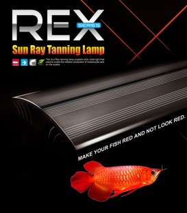 Dymax Rex Sunray Arowana Tanning Lamp 120cm
