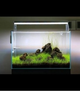 ANS Opti Tank Combo 45M with Twinstar LED 450E