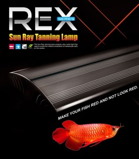Dymax Rex Sunray Arowana Tanning Lamp 90cm