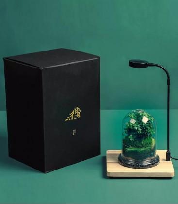 BG Plus Terrarium Kit - plants desktop display tank
