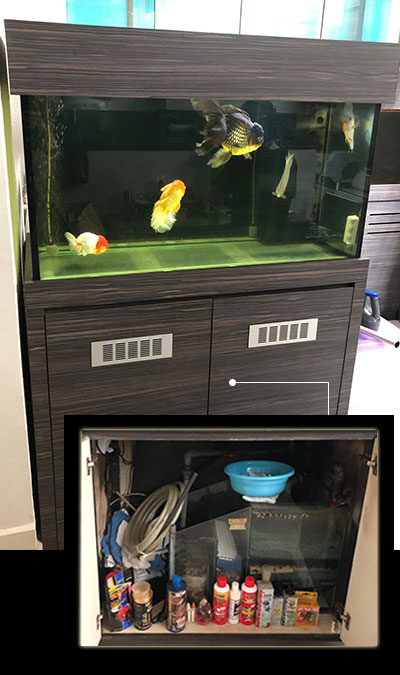 "Second hand aquarium, 10mm all 42"" l x 21"" w x 24"" h with rec overflow box to sump and cabinet set"