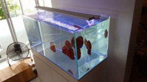 4ft-015 N30 Tank - 15mm all crystal USA 4ft x 2ft x 2ft braceless