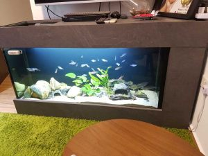 6ft-0014 N30 Tank 6-feet Floor Tank. This aquarium tank doubles as a table top and TV console. Plenty of space for hi-fi, gadgets, router, photo frame. Kids will enjoy the unobstructed view of fishes while adults will find the floor tank practical.