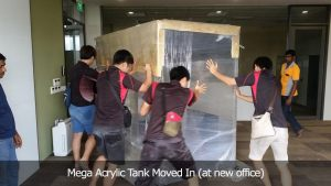 Mega Acrylic Tank Moved In (at new office)
