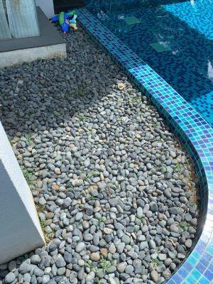 Convert area into fish pond (11)
