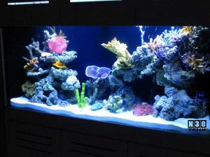 Aquarium Tank Maintenance Service by N30