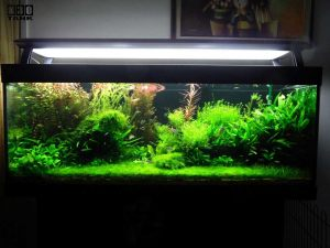 Planted Tank Maintenance Service by N30 Tank (Singapore)