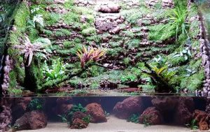 Aquarium Scaping & Maintenance by N30 Singapore