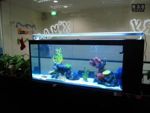 aquarium for office. office5 aquarium for office