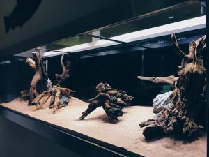 Aquarium Scaping: Let N30 transform your aquarium into a beautiful sight with landscaping and sandscaping works.
