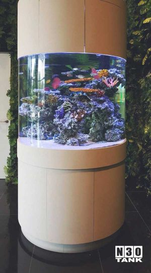 People would parade around this round pillar tank, mesmerised by the exquisite arrangements of the rocks. N30 aqua scaping team has done a stunning job scaping this round pillar tank which is eye-catching from any direction.