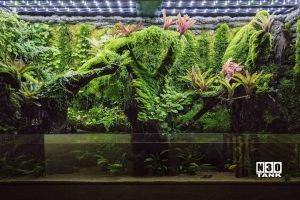 Vivarium scaping by N30