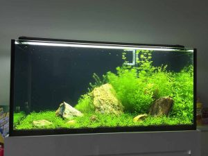 scaping-001 - New 4ft Planted Tank setup done by N30 Tank