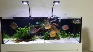 scaping-003 - Tank 15mm all 5ft x 2ft x 20