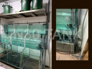 Restaurant Seafood Tank built by N30 Tank Singapore