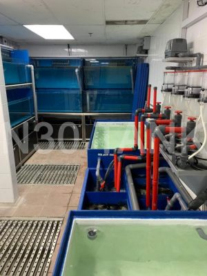 Protein Skimmer Filtration System for Seafood Tank custom-built by N30 Tank