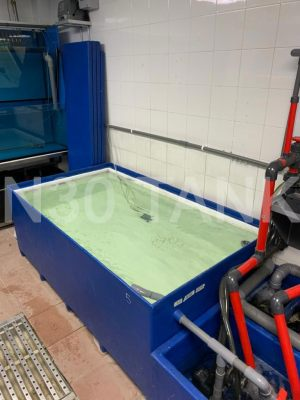Restaurant Seafood Storage Tank custom-made by N30 Tank