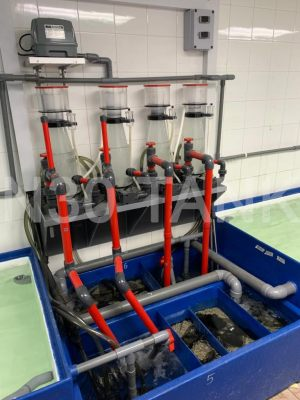 High Performance Protein Skimmer Filtration for Seafood Tank custom-built by N30 Tank