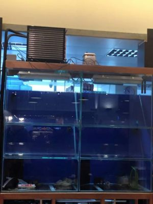 Restaurant Seafood Tank built by N30 Tank