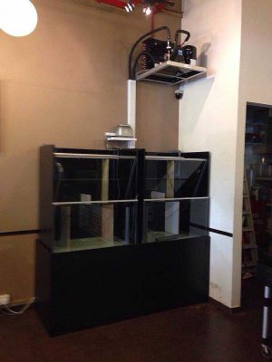 Restaurant Seafood Tank custom made by N30 Tank